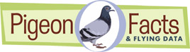 Pigeon Facts and Flying Data